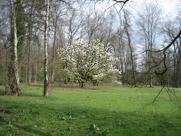 magnolie fr hbl hender baum oder strauch. Black Bedroom Furniture Sets. Home Design Ideas